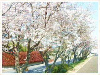 近くにある桜並木です。春には満開の桜がお楽しみ頂ける絶好のスポットです。